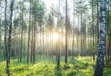 EcoVadis, Metsä
